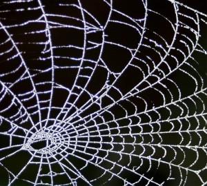 Toile d'araignée (cc FOXYPAR4)